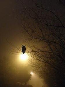 waiting.owl